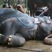 Elephant Bliss (1X7A4589b)