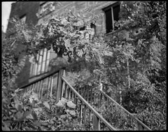 looking up, through tree limbs, stairway, warehouse, River District, Asheville, NC, Koni Omega Rapid 100, Super Omegon 90mm f-3.5, Kodak TMAX 400, 11.10.18 (steve aimone) Tags: lookingup treelimbs stairway stairs warehouse riverdistrict asheville northcarolina koniomega koniomegarapid100 superomegon90mmf35 6x7 primelens kodaktmax400 ilfordilfosol3developer mediumformat monochrome monochromatic blackandwhite 120 120film film urbandecay urbanlandscape