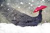 Lady Bird (Cat Girl 007) Tags: art artistic bird black concept digitalart dream fantasy lady ladybird magic mystical red snow snowing solitude surreal umbrella white whimsical