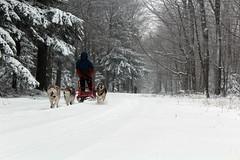 IMG_0031_AutoColor (LifeIsForEnjoying) Tags: snow mushing dog sledding dogs kaskae sitka nike