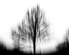 time shift (Dr Kippy) Tags: icm intentionalcameramovement canon7d sigma1750mmf28 bw blackandwhite blackwhite mono monochrome tree abstract