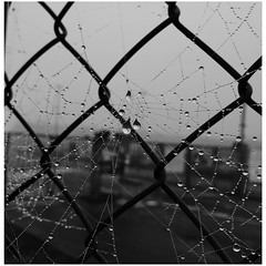 A spiders web (erlingraahede) Tags: vsco iphoneonly gray fence autumn denmark blackandwhite spiderweb