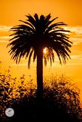 DSC03517 (Jesús Hermosa) Tags: 75300mm atardecer cantabria cielo españa santander sky sol sonya200 sonyalpha spain sun sunset