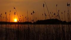 Sunset moment (tonibjörkman) Tags: winter sunset explore hanko finland photo 2019 suomi luonto nature colors landscape europe balticsea maisema talvi kuva lunta kaislat abstrakti abstract
