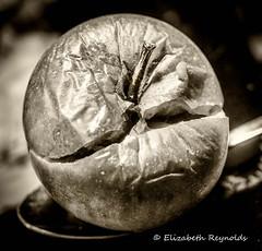 Day 33. (lizzieisdizzy) Tags: tabletop apple rotten old aged split wrinkled crinkled juicy coxapple stalk flesh fleshy edible wine cider cidre maluspumila dof depthoffield blackandwhite blackwhite black whiteandblack white whiteblack monochrome mono monotone monochromatic