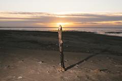 swan vestas (I AM JAMIE KING) Tags: spurnpoint beach breach burnt coast dunes eastyorkshire enviroment post sunset