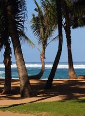 9820_Maui Mamas Palms (Chicamguy) Tags: hawaii hawaiian islands maui