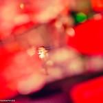 DSC_6151 thumbnail