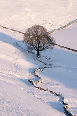 Stone Wall & Tree (JamesPicture) Tags: chrome derbyshire hill parkhouse peakdistrict snow stone limestone wall