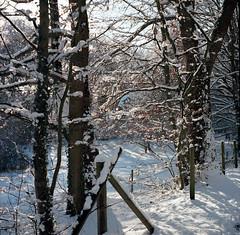 Winter Light at Fence Line (tessar_man) Tags: superikonta zeissikon winter fences 120film 6x6 mediumformatfolders analog