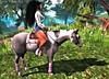 BLOG #240 (Suzie Coba Esquire) Tags: horse teegle animesh expo home garden blog secondlife ride relay life charity
