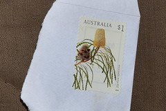 Banksia speciosa [Australian $1 stamp] (Dreaming of the Sea) Tags: australia stamps tamronsp2470mmf28divcusd nikond7200 banksia flowers 1 2018