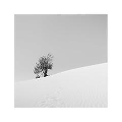 Silent World II (^soulfly) Tags: moretonisland australia desert landscape bnw bw simplicity min minimalistic minimal monochrome lone tree
