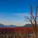 Winter Blueberry Fields