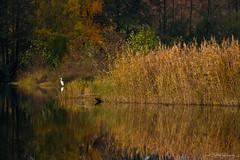 Autumn 2018 I (janmalteb) Tags: canon eos 77d tamron 18200mm autumn season herbst fall