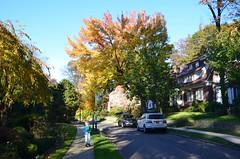 Everett On Shorthill Road (Joe Shlabotnik) Tags: foliage foresthills foresthillsgardens fall queens autumn everett justeverett 2018 november2018 afsdxvrzoomnikkor18105mmf3556ged