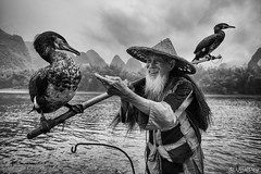 Affection (ujjal dey) Tags: ujjal ujjaldey guilin yangshuo china travel traveler fishermen cormorant landscape mountain river reflection dailylife evening fall dusk krast fujifilm xe2s relationship affection blackandwhite monochrome birds pet candid absoluteblackandwhite