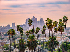 🌴🌴🌴 Make everything better 🙏 To everyone affected by these crazy wildfires (lifeofmikey) Tags: california losangeles beautiful cities landscape photography landscapephotography travel panasonic lumix westcoast skyline cityscapes downtown palmtrees landscapephotographer