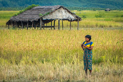 Village Girl Tending the Land (shapeshift) Tags: asia burma davidpham davidphamsf girl kaladan kaladanriver mraukoo mrauku myanmar people rakhine rakhinestate rural shack shapeshift sittwe southeastasia streetphotography travel tributary village villagegirl myanmarburma mm happyplanet