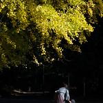 Yellow ginkgo and child in Arisugawa Park (有栖川宮記念公園)