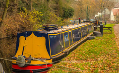 Staffordshire & Worcestershire Canal At Kinver (williamrandle) Tags: kinver southstaffordshire staffordshire england uk 2018 autumn canal waterways water towpath canalside narrowboat boat colourful tree trees woodland green golden outdoor nikon d750 tamron70200mmvcg2f28