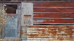 Barn Tin (MBallard) Tags: oldbarn tin chickencoop texas rusty crusty samsunggalaxys7 samsung cameraphone