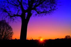 Alba alle Fornaci (ironmember) Tags: alba sole solenascente risingsun sun fornaci fornacidibrescia cielo colorinelcielo raggidisole raggidiluce albero silouette controluce manolibera paesaggio landscape nikond90 d90
