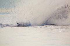 Splash (GlobalGoebel) Tags: canoneos5dmarkiii canonef100400mmf4lisusm 100400mm whale st saint lawrence river travel travelphotography splash tadoussac zodiac cruise tail baiesaintcatherine baie catherine croisieresaml quebec canada