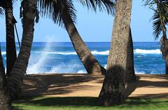 9823_Maui Mamas Beach and Surf (Chicamguy) Tags: hawaii hawaiian islands maui