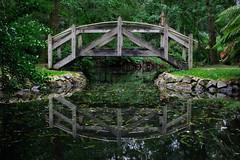 IMG_9875 (sarnovphoto) Tags: dandenong dandenongranges olinda victoria rainforest australia canon canon60d bridge lake water