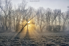 Winter sun (fabrizio daminelli ) Tags: alba sunrise italy fabriziodaminelli canon lombardy lombardia wildlife natura nature landscape paesaggio sole sun fog nebbia river fiume adda