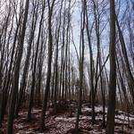 im Wald thumbnail