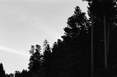 (Student-Of-Life-72) Tags: trix 400 nokton50mmf14 film voightlander bessar2m bessa analog