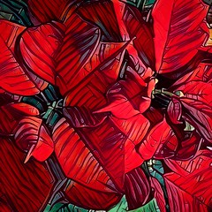 BoingSettia (rcvernors) Tags: holidays christmas red poinsettia flower altereduniverse rcvernorsyahoocom rickchilders rcvernors