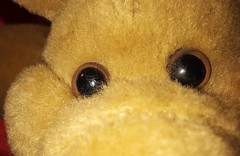 Rusty, The one who blinks first loses! ;) HMM! (Jon Hughes2) Tags: macromondays fuzzytoy macro closeup samsungj3 picktwo
