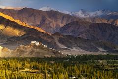 Light & Shade @ Ladakh, India (Avisekh) Tags: ladakh india shey thikse himalaya sunset golden nature monastery buddhism snow mountain tree nikon wwwavisekhphotographycom d850 70200f4 tripod rrs gnd polarizer leefilters