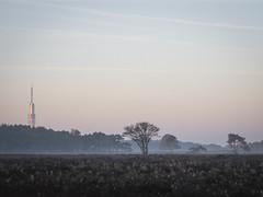 Bussumerheide 2018: Towering flats (mdiepraam) Tags: bussumerheide 2018 bussum westerheide heath earlymorning dawn sunrise tree branch heather tower mediapark sky