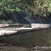 Transporting the tree downriver - the canoes