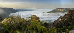 Shrouded Megalong Valley below Nellies Glen ([S u m m i t] s c a p e) Tags: bluemountains summer nativeplants katoomba