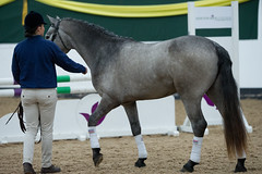 2018-04-n5-3437 (dolphinpix) Tags: horse stallion equine equestrian