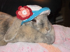 Pretty miss Polly (eveliensbunnypics) Tags: bunny rabbit lop lopeared polly indoor house lap towel blankie hat crocheted cotton flower girly inside