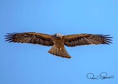 IMG-20180404-WA0001 (TARIQ HAMEED SULEMANI) Tags: sulemani tariq tourism trekking tariqhameedsulemani winter wildlife wild birds nature nikon