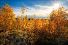 Blattgold (linke64) Tags: thüringen deutschland germany gegenlicht natur landschaft laub blätter himmel herbst sonne rahmen wolken felsen birken birke