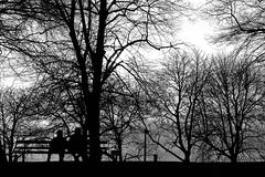 Just sittin' & watchin'. (Steve.T.) Tags: silhouette trees lightandshade maldon essex maldonprom nikon d7200 50mm sittingonabench parkbench blackandwhite bnw mono
