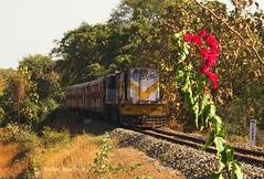 Gir Meter Gauge (The White beast lover...) Tags: irfca meter gauge mg girforest metergauge ydm4 railways indianrailways
