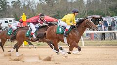 2019 Aiken Trials (APGougePhotography) Tags: horse horses thoroughbred equestrian equine race racing aiken country southcarolina south carolina nikon nikond850 d850 spring