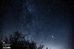 Junipers under the sky (simone_aramini) Tags: nikon landcape astrophotography nightlight nightscapes mountain stars paesaggi nikond200 d810 sigmalens longexposure milkyway appennino umbria rural fields