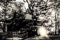 日向 - 03
