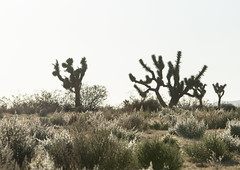 California desert (George Baritakis) Tags: california desert travel travelblog travelling carride blackandwhite nature emptyness