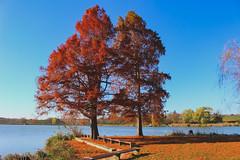 Nagykanizsa Csótó (Péter Vida) Tags: autumn sky wood pool natural vegetable scenery landscape